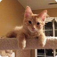 Adopt A Pet :: Oscar - McHenry, IL