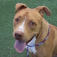 Adopt A Pet :: XERO - Las Vegas, NV