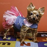 Adopt A Pet :: Doodlebug - Baton Rouge, LA