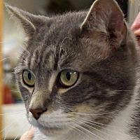 Adopt A Pet :: Professor - Sprakers, NY