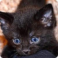 Adopt A Pet :: Star - Xenia, OH