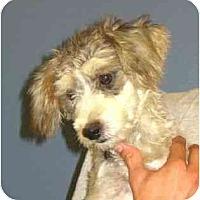 Adopt A Pet :: Kati - Kingwood, TX