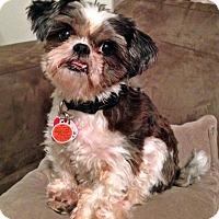 Adopt A Pet :: Moxy - Toronto, ON