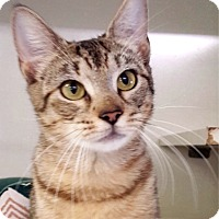 Adopt A Pet :: Venus - Key Largo, FL