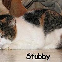 Adopt A Pet :: Stubby - Polson, MT