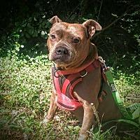 Adopt A Pet :: Freyah - Spring, TX