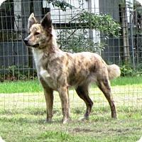 Adopt A Pet :: BIJOU - Dallas, TX