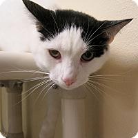 Adopt A Pet :: Kit - Georgetown, TX