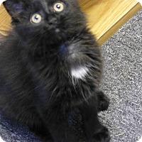 Adopt A Pet :: Kink - Quincy, CA