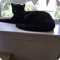 Adopt A Pet :: Dani - Bensalem, PA