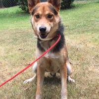 Adopt A Pet :: Maxton - Sanford, NC