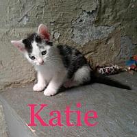 Adopt A Pet :: Katie, Korey & Koalie - valhalla, NY