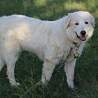 Adopt A Pet :: Lexi - Kyle, TX