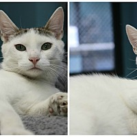 Adopt A Pet :: Howie - Forked River, NJ