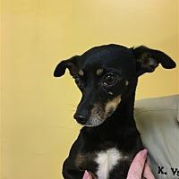 Adopt A Pet :: 17-09-2854b - Dallas, GA