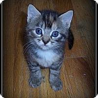 Adopt A Pet :: Skittles - ADOPTION PENDING - South Plainfield, NJ