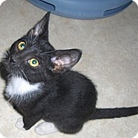 Adopt A Pet :: Oreo - Richmond, VA