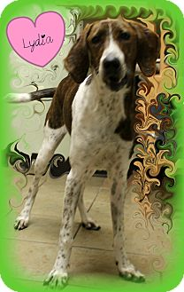 Plott Hound Mix Dog for adoption in Covington, Louisiana - Lydia