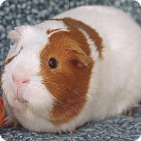 Adopt A Pet :: Montague - Santa Barbara, CA