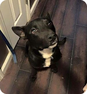 Retriever (Unknown Type) Mix Dog for adoption in Jacksonville, North Carolina - Ears