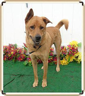 Shepherd (Unknown Type) Mix Dog for adoption in Marietta, Georgia - BUGGY - reclaimed