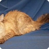Adopt A Pet :: Antoinette - Colorado Springs, CO