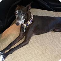 Adopt A Pet :: Bernie - Costa Mesa, CA