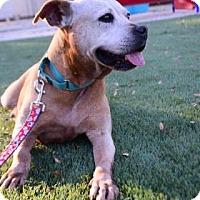 Adopt A Pet :: Peaches - Bradenton, FL