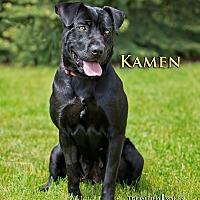 Adopt A Pet :: Kamen - Fremont, MI