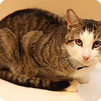 Adopt A Pet :: Edgar: Barn Cat - Newtown, CT