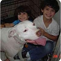 Adopt A Pet :: Jodi - Houston, TX