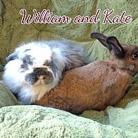 Adopt A Pet :: William - Elizabethtown, KY