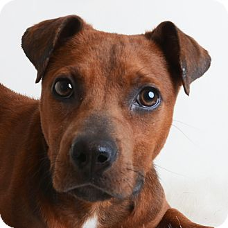 Mixed Breed (Medium) Mix Dog for adoption in Wilmington, Delaware - Rita