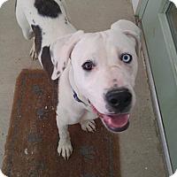Adopt A Pet :: Skye - Bryson City, NC