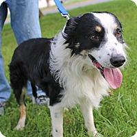 Adopt A Pet :: Gelert - Columbus, OH
