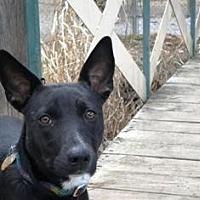 Adopt A Pet :: Norma Jean - Yukon, OK