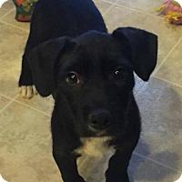 Adopt A Pet :: Luna - Modesto, CA