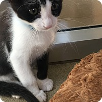 Adopt A Pet :: Frosty - Chula Vista, CA