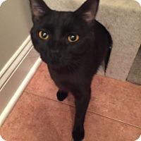 Adopt A Pet :: Denise - Berkeley Hts, NJ