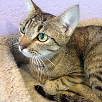 Adopt A Pet :: Sandy - Alamogordo, NM