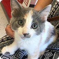 Adopt A Pet :: Dixie - Meridian, ID