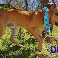 Adopt A Pet :: DUDE - Converse, TX