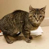 Adopt A Pet :: Jolie - Waupun, WI