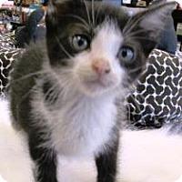 Adopt A Pet :: Dakota - Lebanon, PA