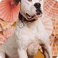 Adopt A Pet :: Hooch - Portland, OR