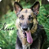 Adopt A Pet :: Nadine - Joliet, IL