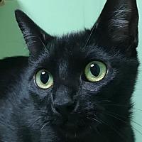 Adopt A Pet :: Heaven - Auburn, CA