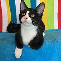 Adopt A Pet :: Sorella - Green Bay, WI