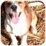 Photo 1 - Beagle Mix Puppy for adoption in Osseo, Minnesota - Barney