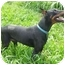 Photo 1 - Doberman Pinscher Dog for adoption in New Richmond, Ohio - Alec--adopted!
